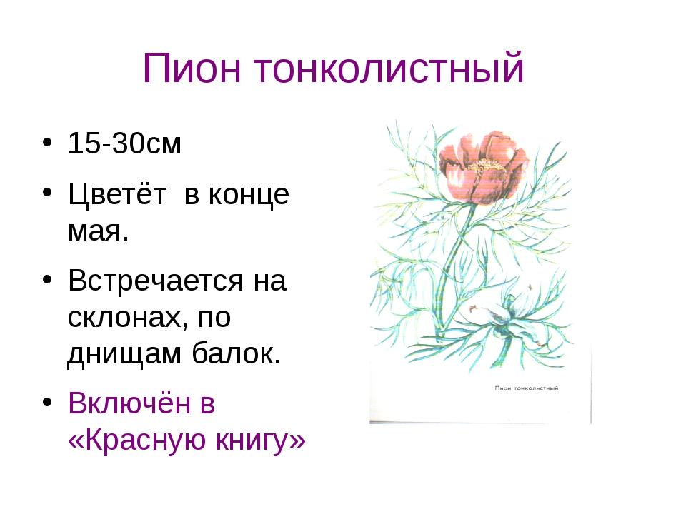 Пион тонколистный 15-30см Цветёт в конце мая. Встречается на склонах, по днищ...