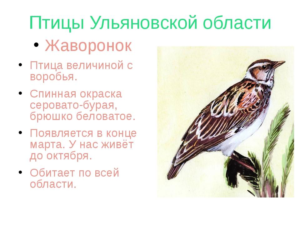 Птицы Ульяновской области Жаворонок Птица величиной с воробья. Спинная окраск...