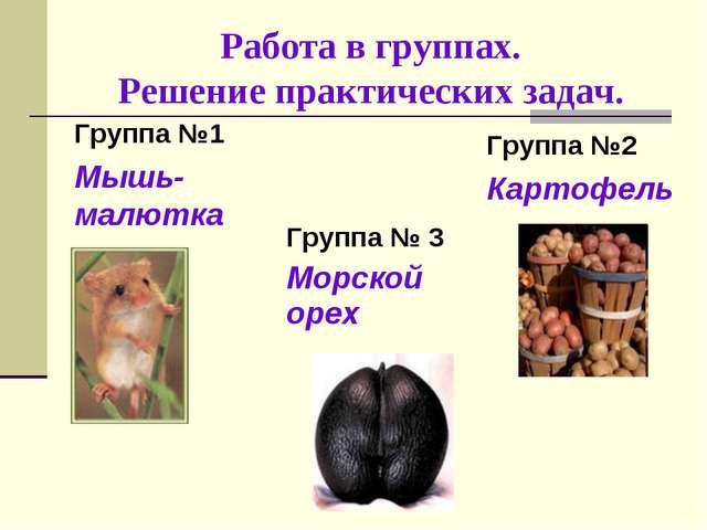 Работа в группах. Решение практических задач. Группа №1 Мышь-малютка Групп...