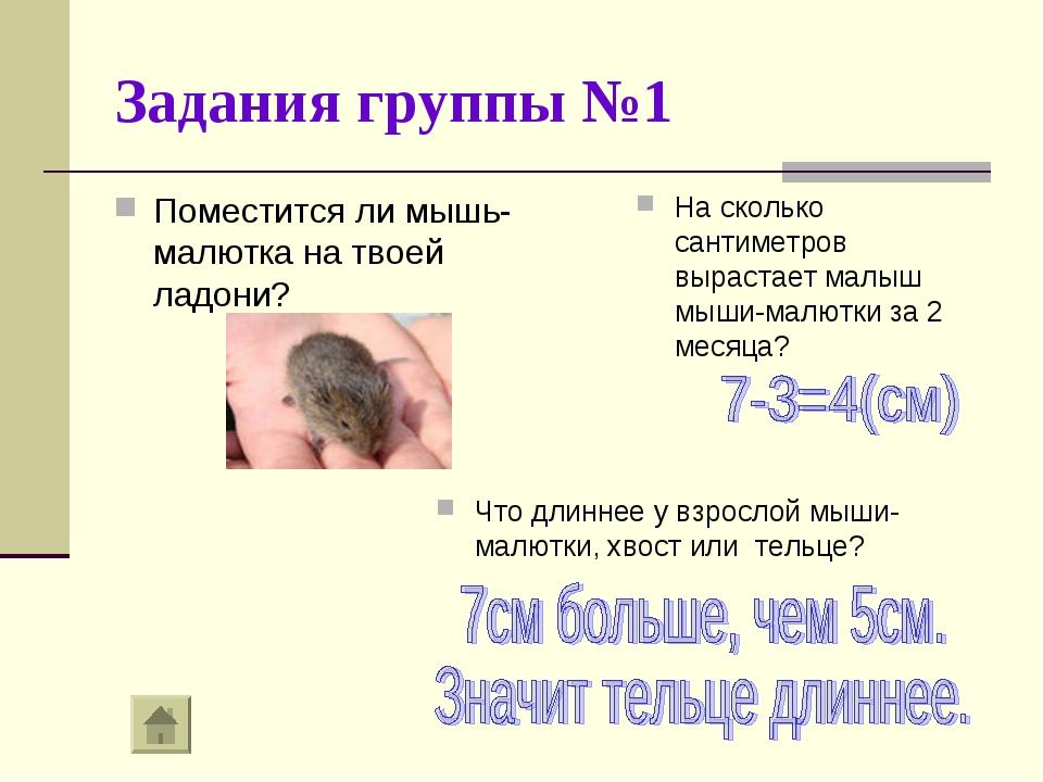 Задания группы №1 Поместится ли мышь-малютка на твоей ладони? На сколько сант...
