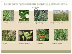 Соотнесите предложенные растения с кислотностью почвы : лебеда вьюнок полевой