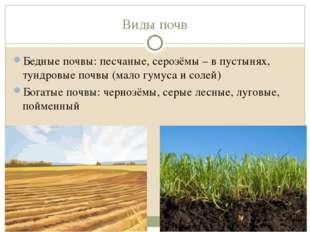 Виды почв Бедные почвы: песчаные, серозёмы – в пустынях, тундровые почвы (мал