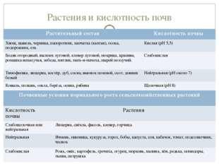 Растения и кислотность почв Растительный составКислотность почвы Хвощ, щавел