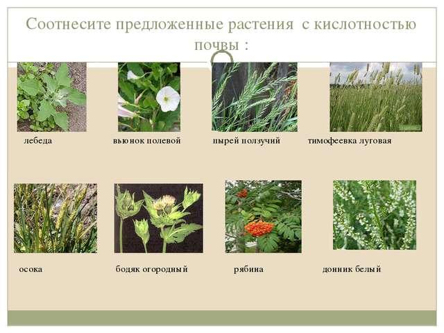 Соотнесите предложенные растения с кислотностью почвы : лебеда вьюнок полевой...