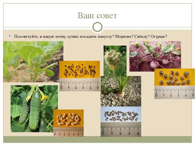 Ваш совет Посоветуйте, в какую почву лучше посадить капусту? Морковь? Свёклу?...