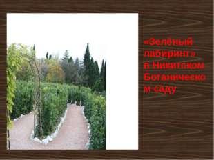 «Зелёный лабиринт» в Никитском Ботаническом саду