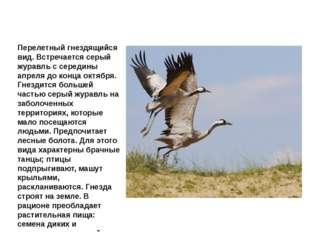 Журавль серый Перелетный гнездящийся вид. Встречается серый журавль с середин
