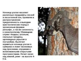 Ночница усатая Ночница усатая населяет различные ландшафты лесной и лесостепн