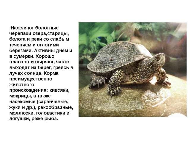 Черепаха болотная Населяют болотные черепахи озера,старицы, болота и реки со...