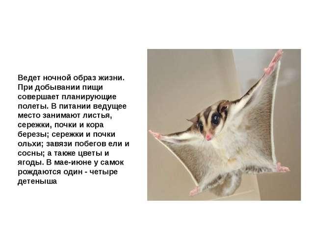 Летяга обыкновенная Ведет ночной образ жизни. При добывании пищи совершает пл...