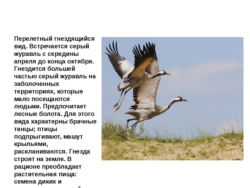 Журавль серый Перелетный гнездящийся вид. Встречается серый журавль с середин...