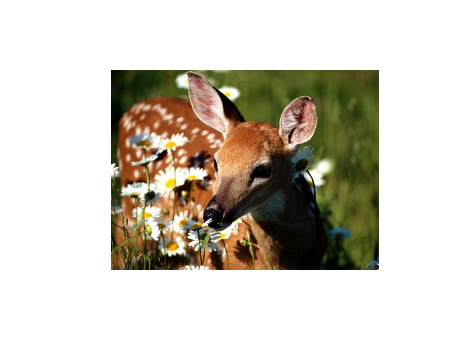 Берегите животный мир ! Живые они намного красивее