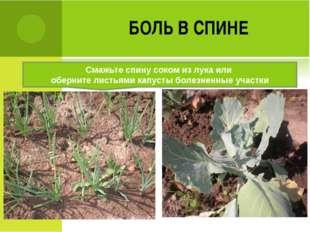 БОЛЬ В СПИНЕ Смажьте спину соком из лука или оберните листьями капусты болезн