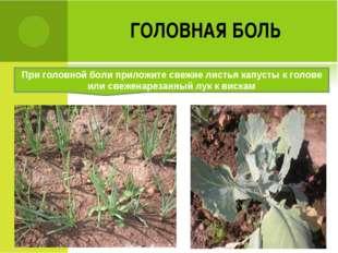 ГОЛОВНАЯ БОЛЬ При головной боли приложите свежие листья капусты к голове или