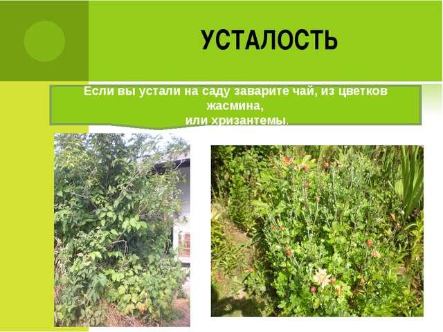 УСТАЛОСТЬ Если вы устали на саду заварите чай, из цветков жасмина, или хризан...