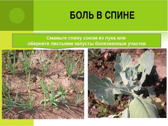 БОЛЬ В СПИНЕ Смажьте спину соком из лука или оберните листьями капусты болезн...