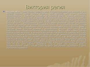 Виктория регия Виктория регия – самая большая кувшинка в мире. Растение, полу