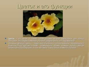 Цветок и его функции * Цветок – это орган, а точнее, целая система органов, х