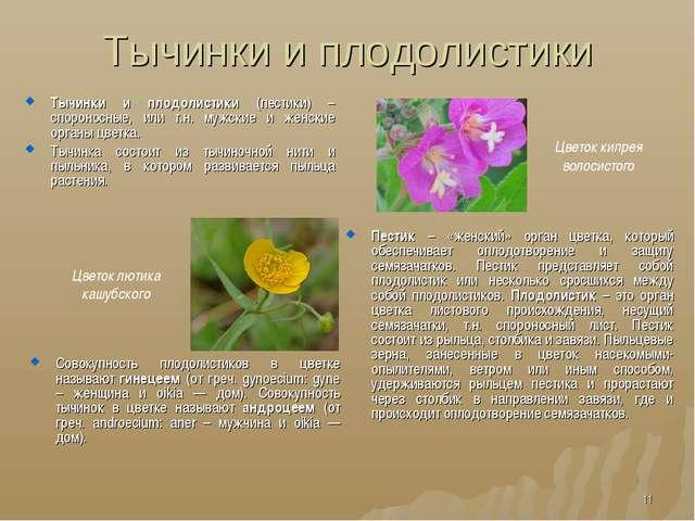 Тычинки и плодолистики Тычинки и плодолистики (пестики) – спороносные, или т....