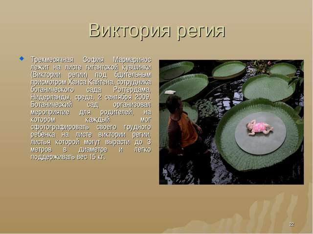 Виктория регия Трехмесячная София Мармаринос лежит на листе гигантской кувшин...