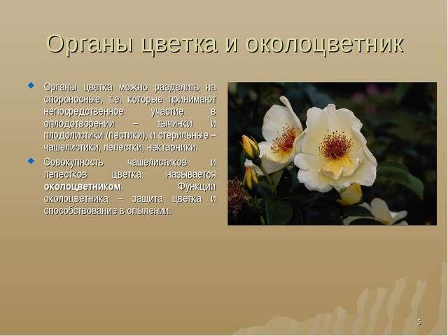 Органы цветка и околоцветник Органы цветка можно разделить на спороносные, т....