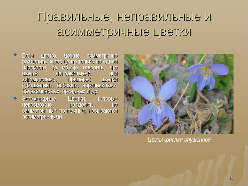 Правильные, неправильные и асимметричные цветки Если цветок можно симметрично...