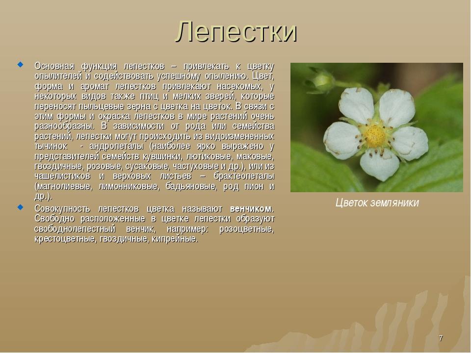 Лепестки Основная функция лепестков – привлекать к цветку опылителей и содейс...