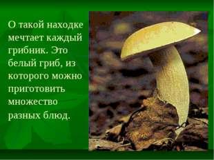 О такой находке мечтает каждый грибник. Это белый гриб, из которого можно при