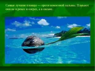 Самые лучшие пловцы — орехи кокосовой пальмы. Плавают они не в реках и озерах