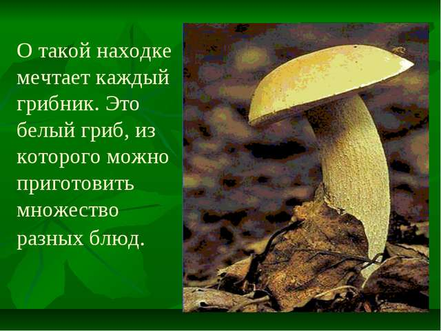 О такой находке мечтает каждый грибник. Это белый гриб, из которого можно при...