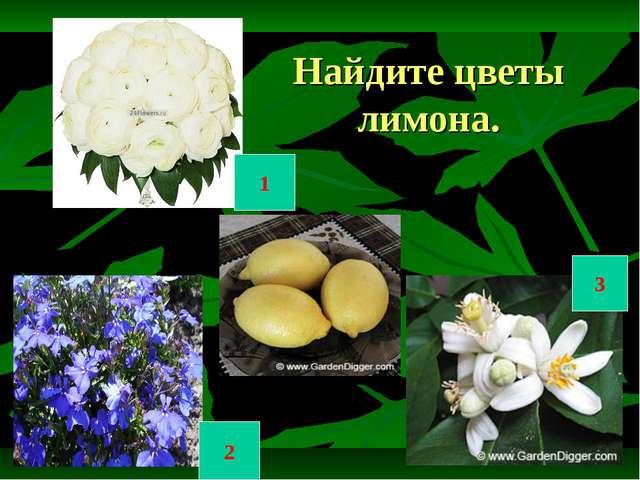 Найдите цветы лимона. 1 2 3