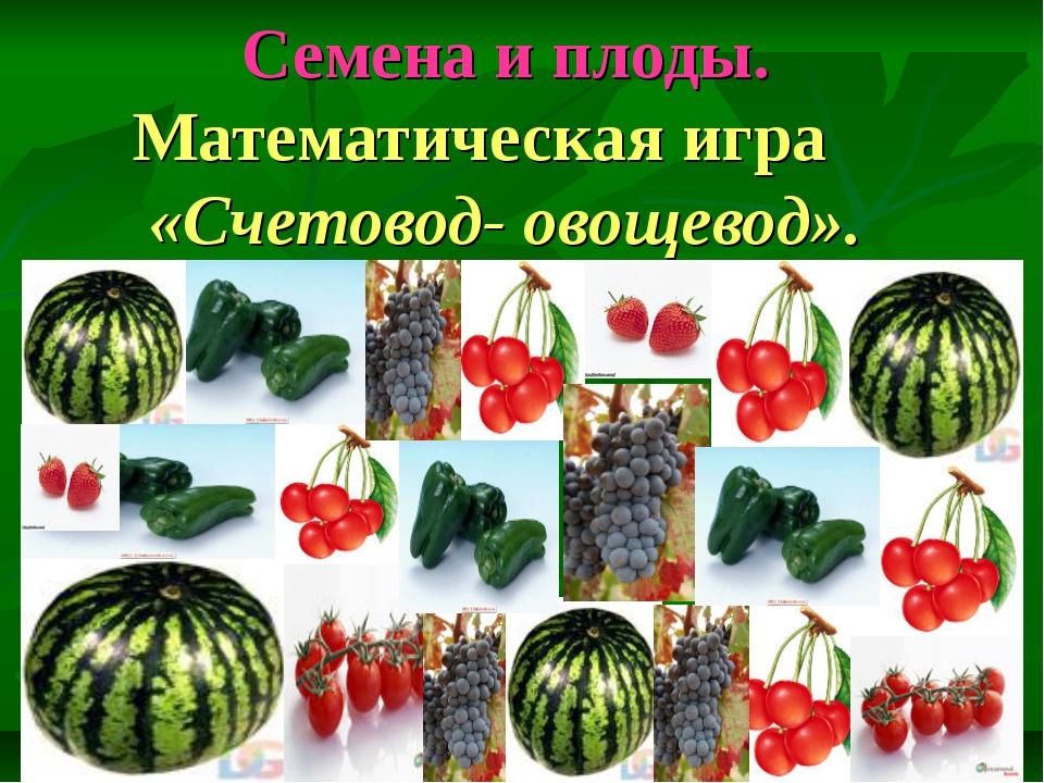 Семена и плоды. Математическая игра «Счетовод- овощевод».
