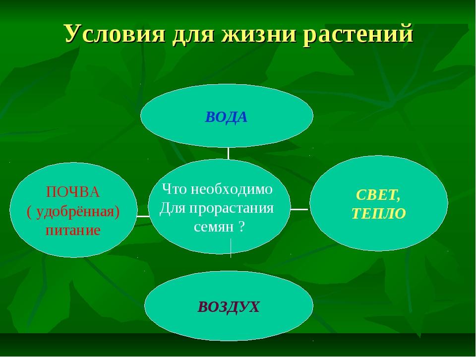 Условия для жизни растений