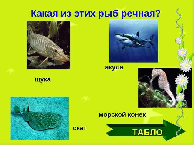 ТАБЛО щука акула скат морской конек Какая из этих рыб речная?