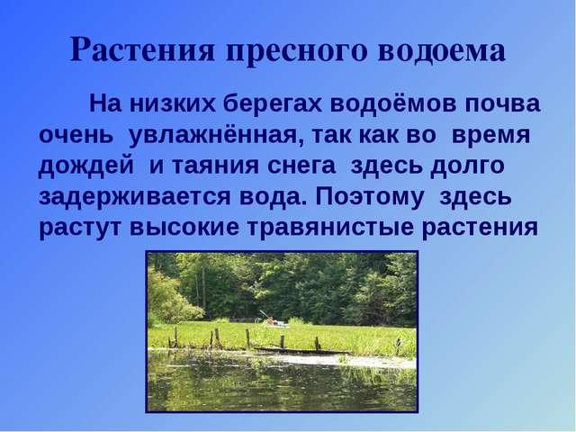 Растения пресного водоема На низких берегах водоёмов почва очень увлажнённая,...