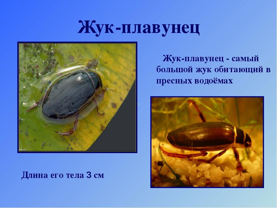 Жук-плавунец Жук-плавунец - самый большой жук обитающий в пресных водоёмах Дл...