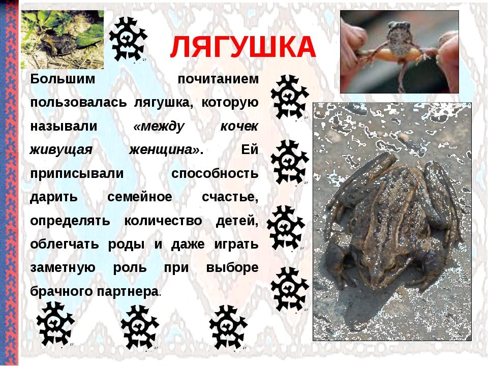 ЛЯГУШКА Большим почитанием пользовалась лягушка, которую называли «между коче...