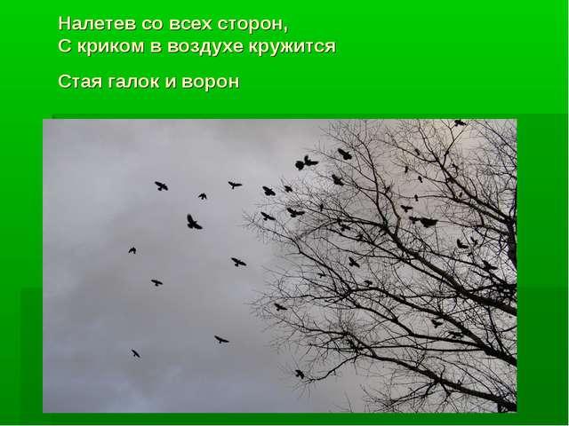 Налетев со всех сторон, С криком в воздухе кружится Стая галок и ворон