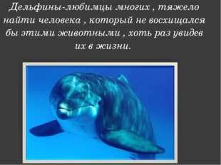 Дельфины-любимцы многих , тяжело найти человека , который не восхищался бы эт