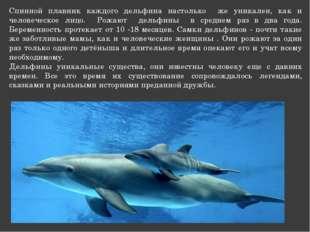 Спинной плавник каждого дельфина настолько же уникален, как и человеческое ли