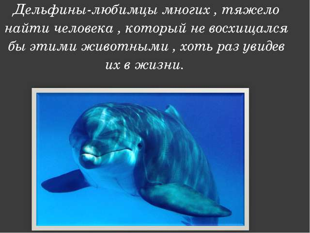 Дельфины-любимцы многих , тяжело найти человека , который не восхищался бы эт...