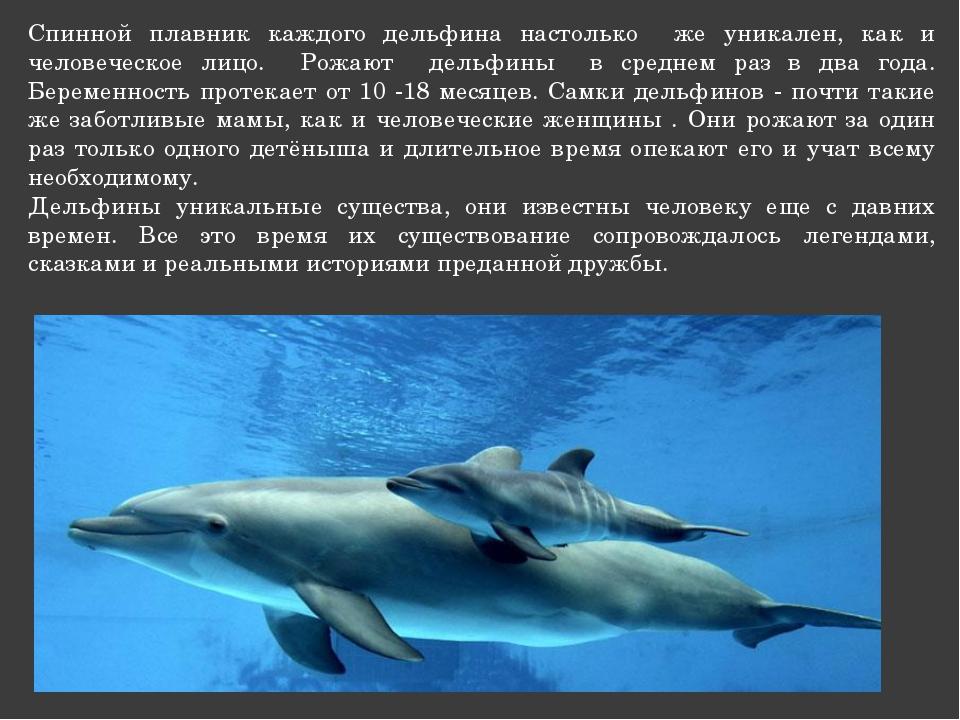 Спинной плавник каждого дельфина настолько же уникален, как и человеческое ли...