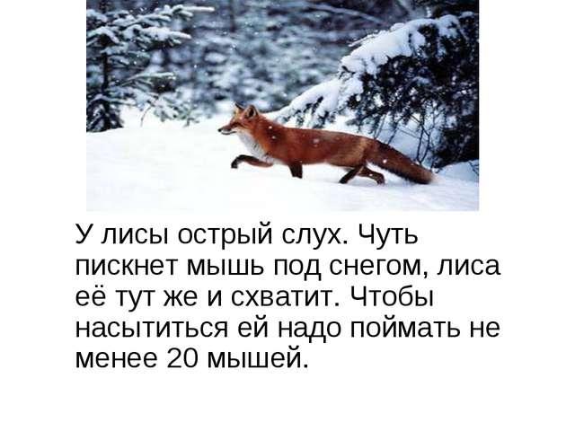 У лисы острый слух. Чуть пискнет мышь под снегом, лиса её тут же и схватит....