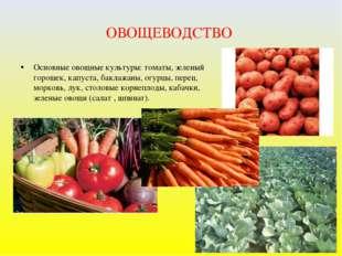 ОВОЩЕВОДСТВО Основные овощные культуры: томаты, зеленый горошек, капуста, бак