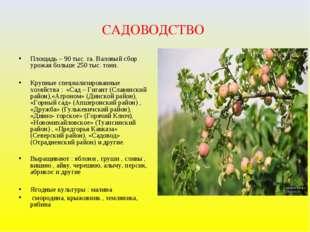 САДОВОДСТВО Площадь – 90 тыс. га. Валовый сбор урожая больше 250 тыс. тонн. К