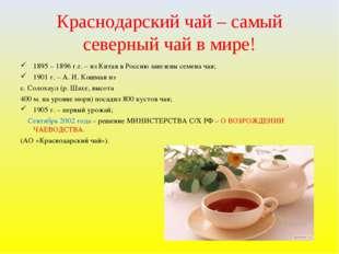 Краснодарский чай – самый северный чай в мире! 1895 – 1896 г.г. – из Китая в