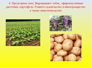 4. Предгорная зона. Выращивают табак, эфиромасличные растения, картофель. Раз
