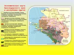 Экономическая карта Краснодарского края и республики Адыгея Зерновые культур