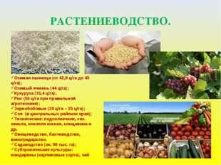 РАСТЕНИЕВОДСТВО. Озимая пшеница (от 42,8 ц/га до 45 ц/га); Озимый ячмень (44