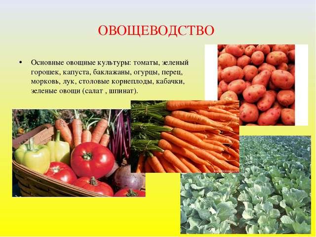 ОВОЩЕВОДСТВО Основные овощные культуры: томаты, зеленый горошек, капуста, бак...